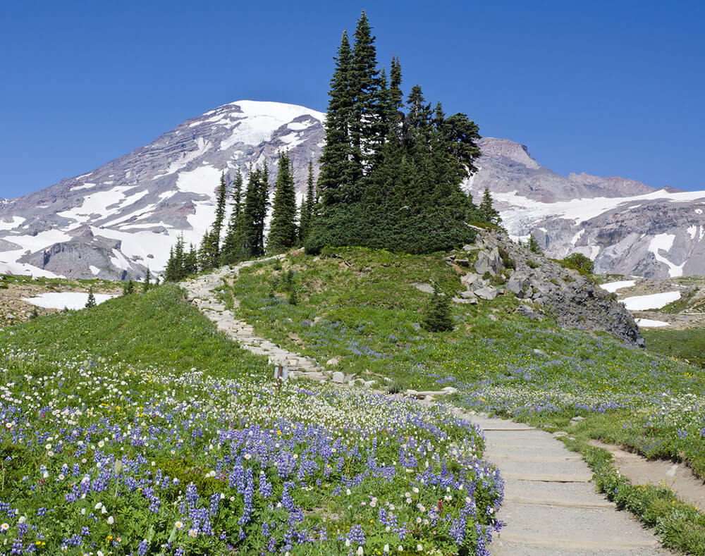 Year Round Fun at Mt. Rainier for You and Your Dogs