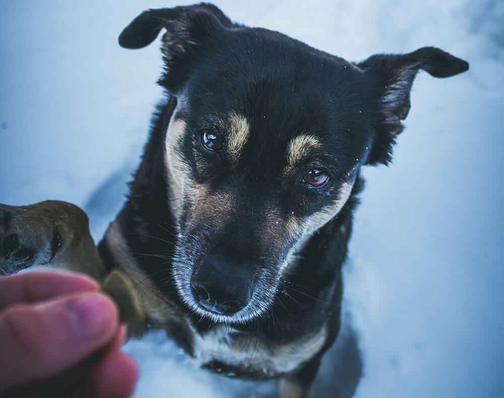 How to Set Your Thermostat to Keep Your Pets Cozy in the Winter